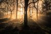 Into the light (jasonhudson2) Tags: ard loch light mist trees landscape woods sony