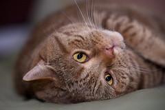 I can haz hugz, pwease? (Siggital) Tags: kenny kadse katze kitty kitteh cat caturday hugs hugz