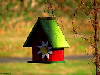 Bird House in the Park.