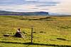 Kirkjubæjarklaustur (Boganeer) Tags: kirkjubæjarklaustur iceland ísland horse colt foal field pasture rest canon canoneos canon6d farm repose sleep fence landscape