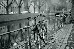 bike@Kö, Düsseldorf 29 (Amselchen) Tags: bicycle trees water reflection city bokeh blur dof depthoffield kö düsseldorf season autumn fall sony a7 alpha zeiss carlzeiss sonnart1855 sonnar5518za fe55mmf18za sonyilce7