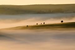 Dans la brume, Nasbinals, Lozère (lyli12) Tags: aubrac lozère leverdesoleil brume paysage landscape france nature arbre languedocroussillon mist nikon d7000