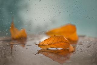 ☔ Rain, rain, don't go away ! ☔