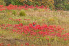Camouflaged for autumn shots (Irina1010) Tags: wildflowers sumac grasses red textures hillside colorful autumn nature beautiful colors photographer camouflaged landscape canon field