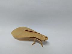 Cicida by Sergey Yartsev (Zephyr Liu) Tags: origami kraft paper ioio ioio2017 cicida sergey yartsev