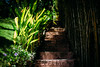 Breathe.. (paul.wienerroither) Tags: breathe bali indonesia beautiful plants green greenisbeautiful light lights lightanddark sun tropical travel travelphotography paradise stairs stairway photography canon 50mm 5dmk3