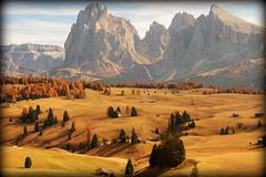 Dolomites' autumn (Italy) (armxesde) Tags: pentax ricoh k3 italien italy südtirol altoadige herbst autumn fall berg mountain alps alpen dolomiten dolomites tree baum alpedisiusi seiseralm sassolungo langkofel sassopiatto plattkofel