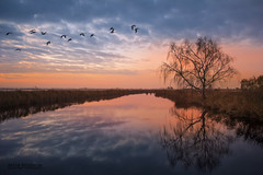 Tree reflection (Artur Rydzewski) Tags: sky sunset dawn dusk water nature tree reflection landscape lake sun sunrise evening river outdoor clouds redsky redskyatmorning flying noperson flood atmosphere flock afterglow pond horizon cloudy plane waterway bird morning treereflection