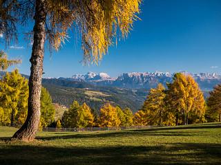 Lärchenverfärbung mit Dolomiten