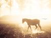 The most precious gold (Ingeborg Ruyken) Tags: dropbox autumn thenetherlands paarden woods dawn berlicum nederland horses paard 2013 flickr herfst ochtend morning november wamberg forest 500pxs natuurfotografie landgoed horse bos naturephotography