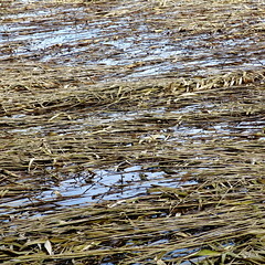 laid line (vertblu) Tags: reeds reed winterreeds lyingreeds latewinter pond pondlife pondsurface pondscene bythepond water waterabstract reflection reflectedskies reflected bluewater mutedcolours subduedcolours wintercolours faded fadedcolours fadedreeds snappedreeds snapped snappedoff abstract abstrakt abstraction abstractnature abstractsquared abstracted abstractfeel almostabstract natureabstracted 500x500 bsquare kwadrat vertblu lightblue softblue softgreen softcolours softcoloured patterning