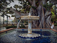 An Ancient Tree in an Ancient City (Jocelyn777) Tags: trees gardens fountains parks cadiz andalucia spain travel textured