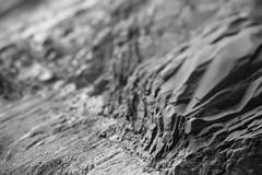 Short Sand Beach (Tony Pulokas) Tags: oregon oswaldweststatepark capefalcon shortsandbeach beach smugglerscove autumn fall rock tilt shift blur bokeh