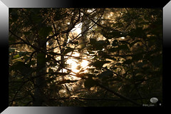 A hike in the woods (midnightstudio85) Tags: nature hike beauty outdoors adventures trees travelphotography canon canonphotography wanderer dslr