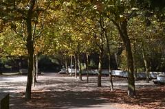 Parque da cidade (Andmtorres) Tags: porto oporto portugal serralves parquedacidade parque park natureza nature