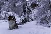 Happy! (Maxime's pictures) Tags: tree mountain venosc isère rhonealpes snow cascade dog bergeraustralien australianshepherd montagne nature forest blanc white