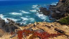 De regresso ao mar (antoninodias13) Tags: mar oceanoatlântico azul imensidão marés maresia falésias selvagem flora fauna costavicentina aljezur faro algarve portugal agua pedras baía litoral barlaventoalgarvio