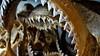 shark (-POLAK-) Tags: kosamui koh samui thailand donesia egzotic nikon budda bangkok michalpolak