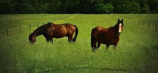 I love horses - Ich liebe Pferde (serie) , 75698/9169