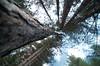 Apparente convergenza (Akijos) Tags: nikon d7000 tokina 116 atx116 1116mmf28 tokina1116 natura nature trees alberi
