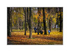 In the park (Alexandr Voievodin) Tags: park autumn landscape trees grass leaves people nikon 1 v1