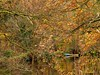 Rowing Boat - at Loxley! (Keefy243) Tags: rowing boat reflections autumn loxley sheffieldsouthyorkshireuk
