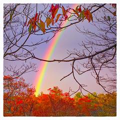 After the Rain (Timothy Valentine) Tags: 2017 clichésaturday outback fbpost 1117 home rainbow eastbridgewater massachusetts unitedstates us