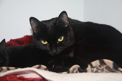 Libra - 9 month old spayed female
