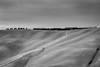 Tracteurr au loin (David-Charles Arrivé1) Tags: italie toscane nb 100mm 5dmarkii