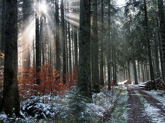 first snow, first sunrays (Paramedix) Tags: wald baum schnee snow sonne sun nature natur landscape landschaft olympus em5 mft fluorn winter