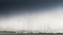 Réunion de campagne (Bertrand Thiéfaine) Tags: d750 ancenis automne brume matin maraisdegrée leverdujour campagne haies arbres bleu blanc prairie paysage