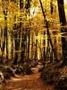 La Fageda d'en Jordà (Ana De Haro) Tags: otoño autumn bosque forest landscape marron colores catalunya cataluña catalunyaexperience la fageda den jordà santa pau hayedo garrotxa garrocha