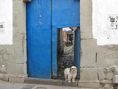 Two dogs and a blue door. Cuzco_San Blas (Lewitus) Tags: sanblas cuzco 2007 dogs peru