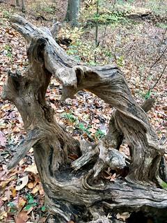 Patapsco SP ~ roots as art
