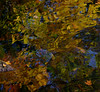 Autumn Mosaic 2 (vbd) Tags: pentax k3 vbd smcpentaxda55300mmf458ed ct connecticut water newengland river reflection fallcolor pequonnockriver leaves oldminepark 2015 fall2015 handheld stonewaterlight autumn abstract