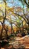 Autumn colors (MelindaChan ^..^) Tags: busan skorea 釜山 chanmelmel mel melinda melindachan maple autumn fall season travel
