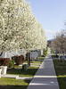 Spring Blossoming Trees For Sale Sign Sidewalk (Photo Dean) Tags: 2017 background blossomingtree clipart daybreakutah housefront photo photography saltlakecounty southjordan spring springtrees usa ut utah