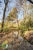 puddle reflection (Beale.UK) Tags: suttonpark suttoncoldfield parks outdoors landscape landscapes bealeuk