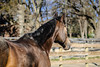 IMG_7283 (Tyler Ochs Photography) Tags: horses horse halter