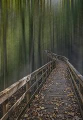 Caminando hacia el futuro (Urugallu) Tags: bosque pasarela luz color hojas otoño suelo galicia orense joserodriguez urugallu canon 70d flickr spain españa