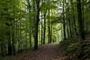 Müngstener Brückenpark (kalakeli) Tags: müngstenerbrückenpark bergischesland wunderschönesnrw forests wälder green september 2017 grün herbst autumn