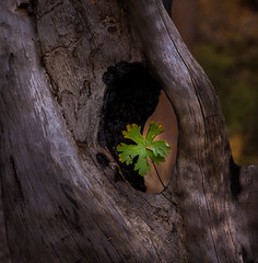 Amazing life (Eve Photography By JC Clemens) Tags: color select arizona dead tree arch clover nikon d610 lightroom creative landscape