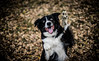 _DSC7558 (Ryan Ivy) Tags: border collie dogs cutter creek ranch wills point texas