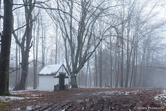 Chapel in the fog (gillesfrancotte) Tags: 2017 december outdoor saintroch chapel chapelle fog forest landscape mist nature outside sousbois tree undergrowth underwood winter aywaille wallonie belgique be