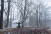 Chapel in the fog (gillesfrancotte) Tags: 2017 december outdoor saintroch chapel chapelle fog forest landscape mist nature outside sousbois tree undergrowth underwood winter aywaille wallonie belgique be