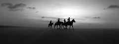 The journey (alestaleiro) Tags: silhouettes horses ride jinetes controluce contralus põrdosol tramonto monochrome mono monocromo bn bw pb cavalli caballos caravan journey siluetas jericoacoara duna dune desert desierto jeri ceará brasil alestaleiro