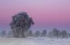 Winter (fotoerdmann) Tags: niedersachsen deutschland germany baum farben blauestunde nebel schnee landschaften frost winter❄️ winterfoto canon fotoerdmann