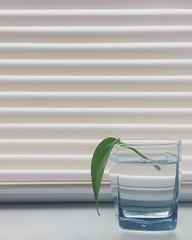 Fresh Cut (whatsayjk) Tags: indoor interior minimal minimalism simple iphone plant botanical vine greenthumb window decor fresh light