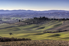 Der Vogelzug (Prenner Manuel) Tags: 2016 acker dezember europa felder italy landscape landschaft landwirtschaft toskana umgebungvonsiena vögel zypressen