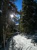Trail Through The Trees (DCZwick) Tags: ski snow winter mountains rockymountains canadianrockies skiresort sunshine sunshinevillage banffpark banffnationalpark alberta canada pentaxq7 sunshineinn sun trees trail birdcage